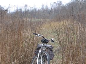 Zdjęcie 3. Trawy wzdłuż rzeki.